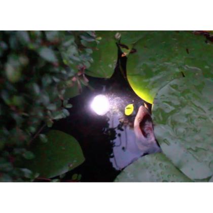 Outdoor Waterproof Pool Solar 6 LED Spotlight